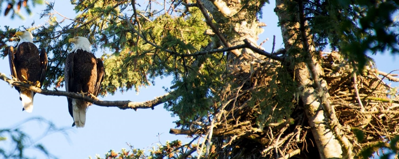 eagles (1280x512)